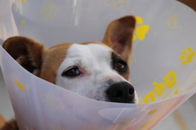 Comment sont remboursés les frais médicaux en arrêt de travail pour un vétérinaire